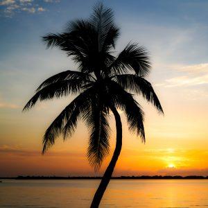 Jensen Beach Palms
